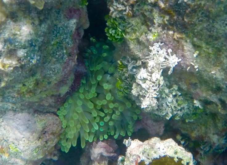 Utila Coral Reef