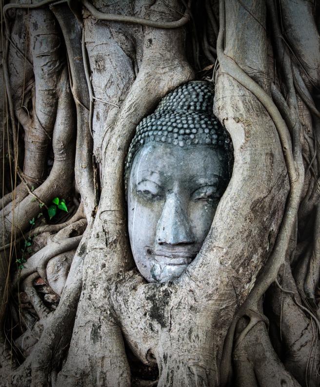 buddhaintree