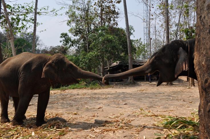 elephantplaythailand