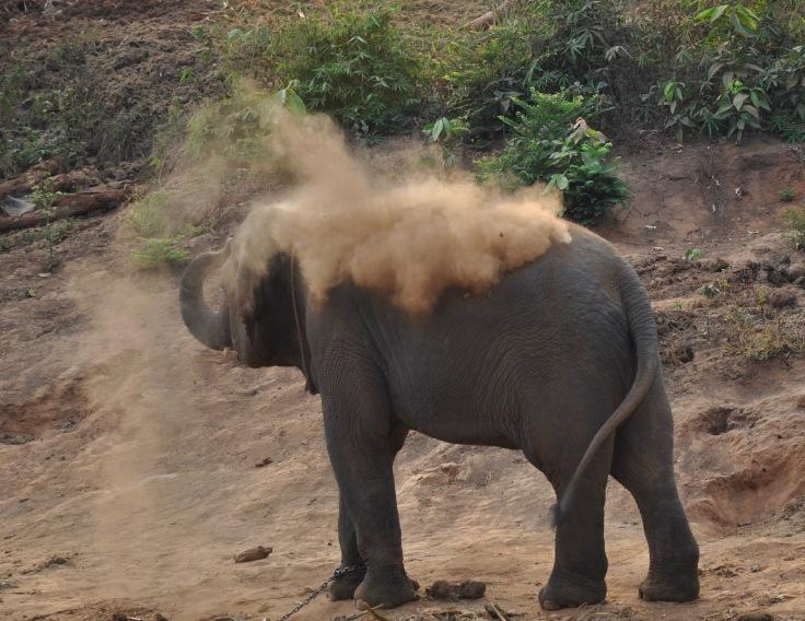elephantschiangmai