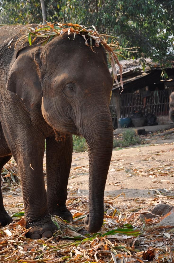 elephantthailand
