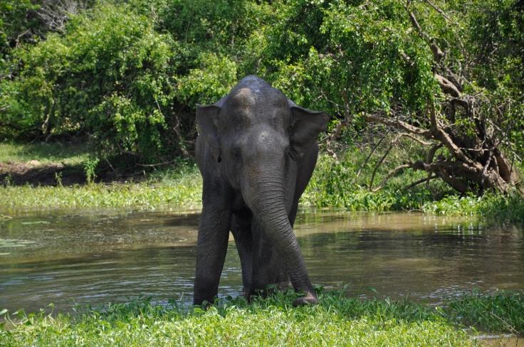 elephantyalapark