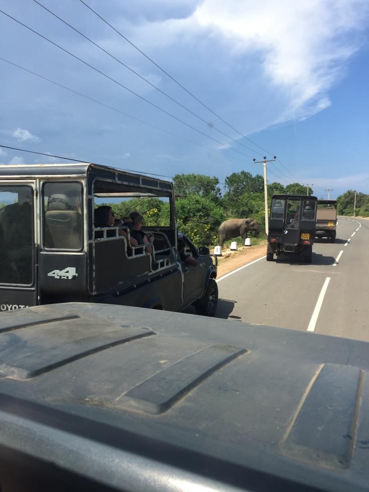 yalanationalparksafari