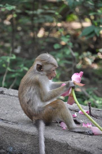 monkeywithflower