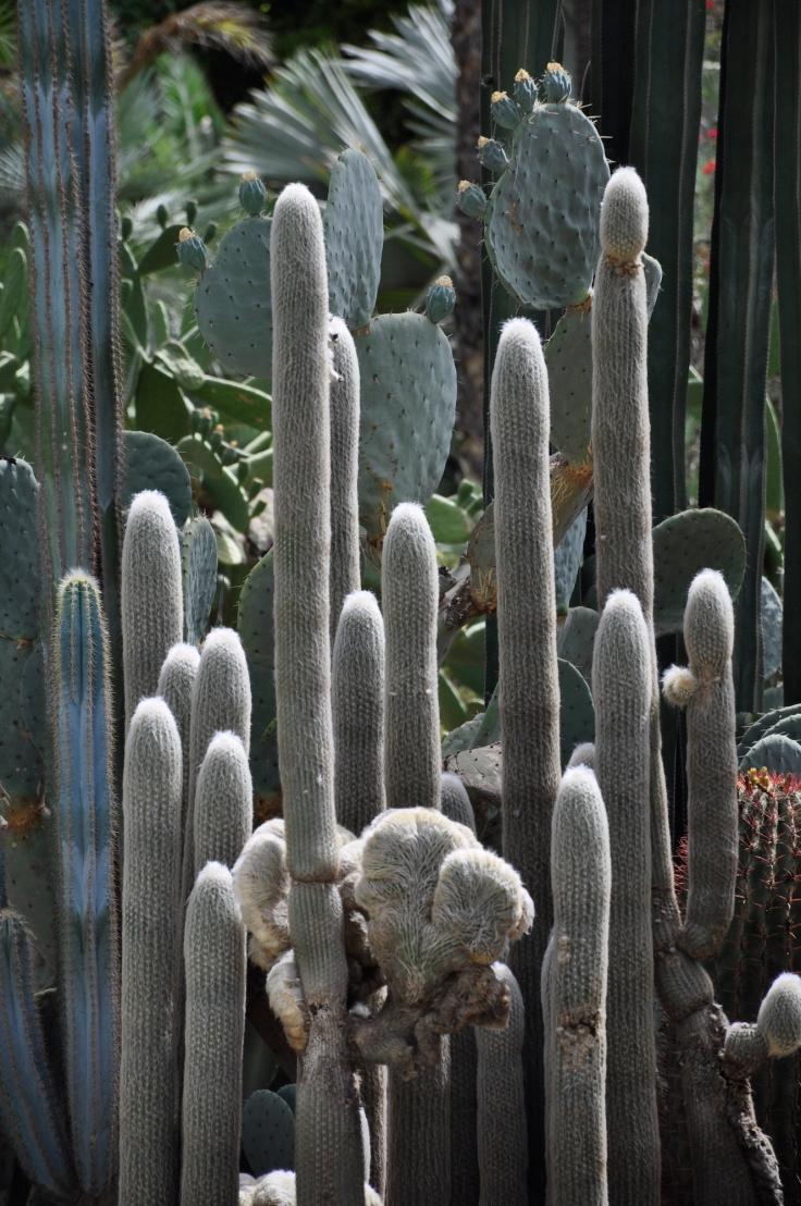 cactusgardenmajorelle.JPG