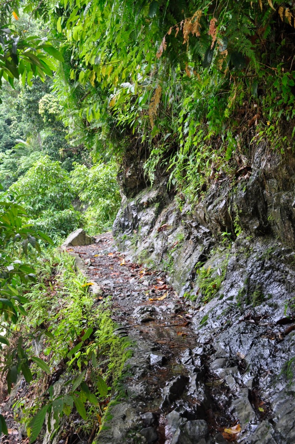 Trekking through Bukit Lawang Indonesia