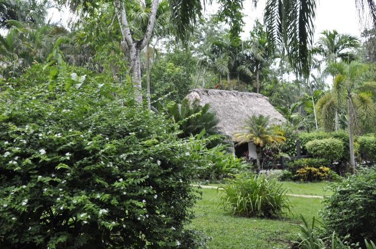 Jungle cabana at Belize Hotel