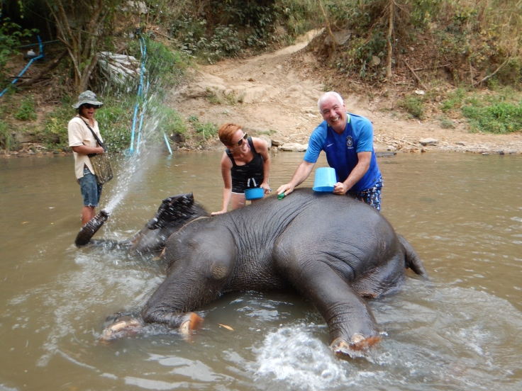 Thailand baby elephant taking bath