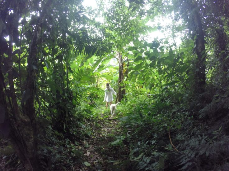 Jungle Hiking Pico Bonito National Park Trees La Ceiba Honduras With Dog